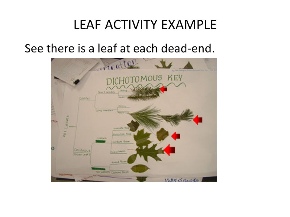 LEAF ACTIVITY EXAMPLE See there is a leaf at each dead-end.
