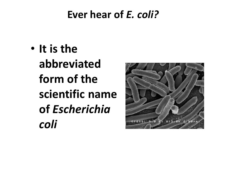 It is the abbreviated form of the scientific name of Escherichia coli