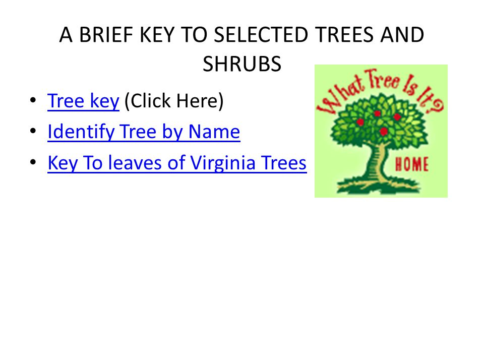 A BRIEF KEY TO SELECTED TREES AND SHRUBS
