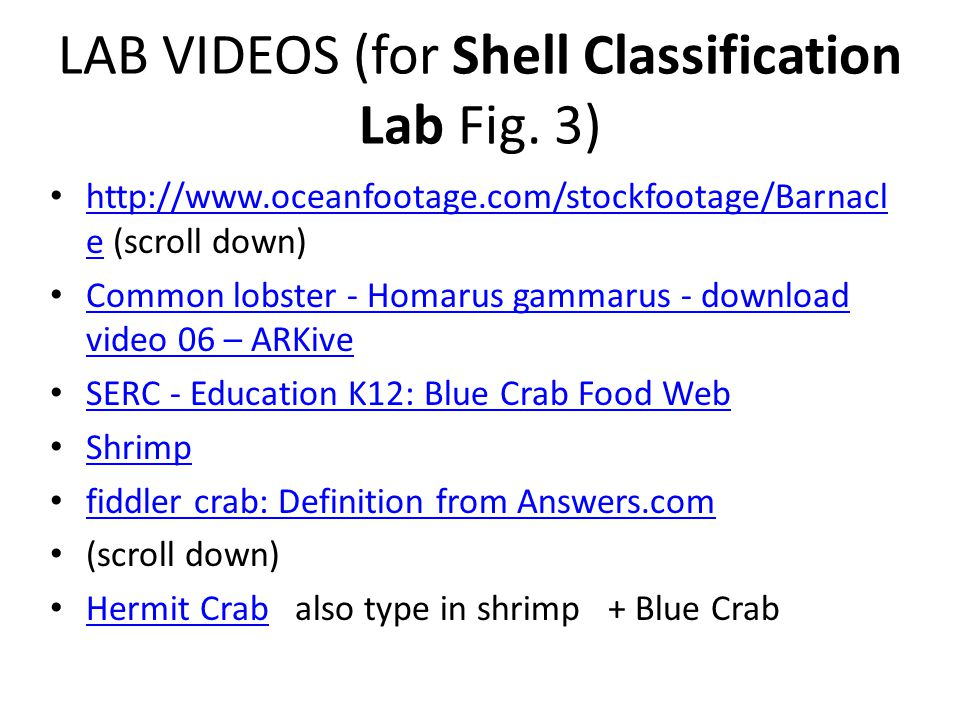 LAB VIDEOS (for Shell Classification Lab Fig. 3)