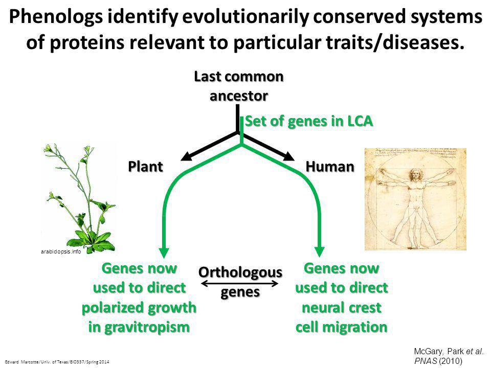 Phenologs identify evolutionarily conserved systems of proteins relevant to particular traits/diseases.