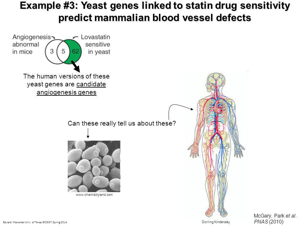 Example #3: Yeast genes linked to statin drug sensitivity predict mammalian blood vessel defects