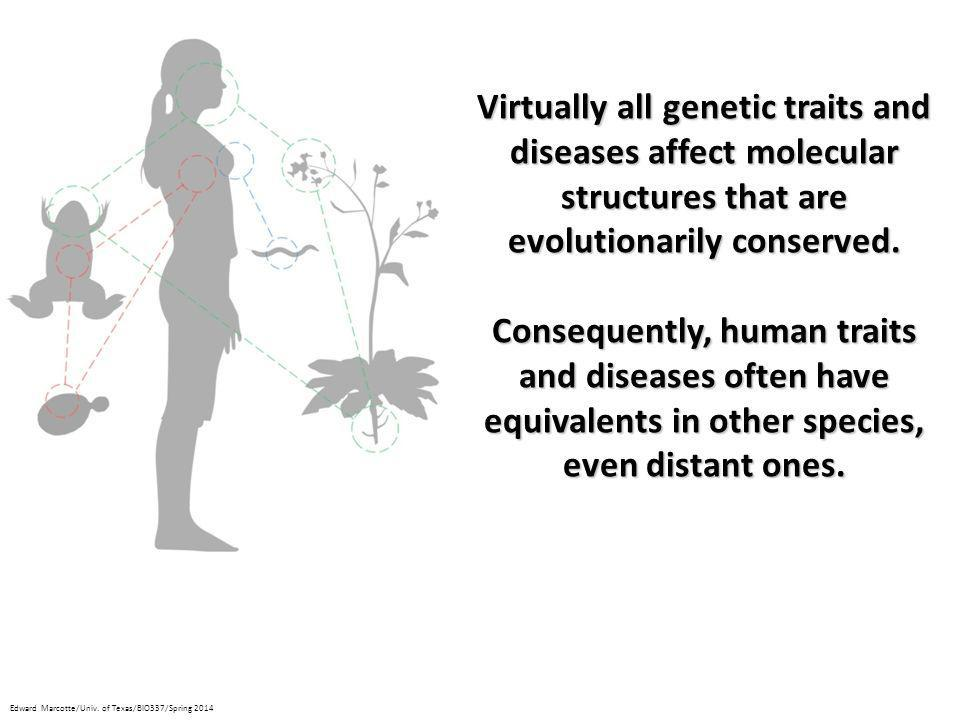 Virtually all genetic traits and diseases affect molecular structures that are evolutionarily conserved.