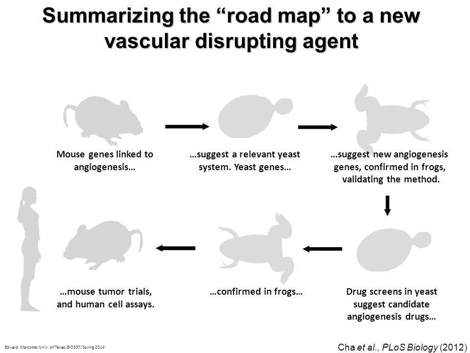 Summarizing the road map to a new vascular disrupting agent