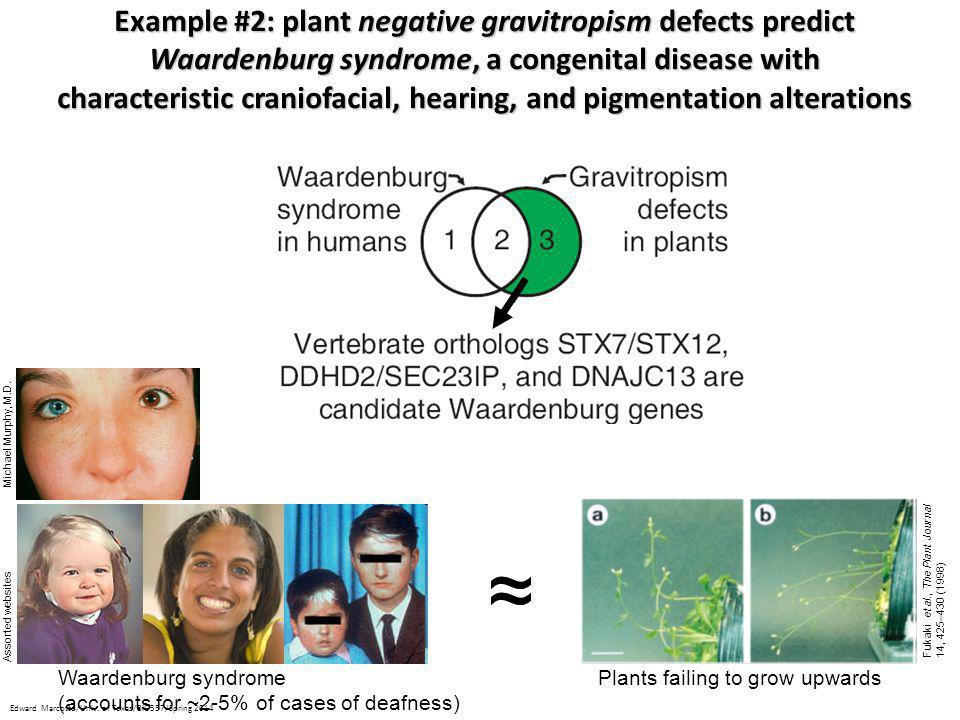 ~ ~ Example #2: plant negative gravitropism defects predict