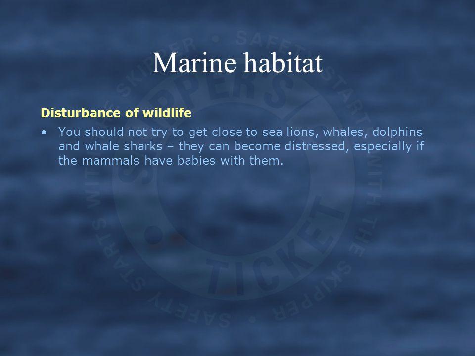 Marine habitat Disturbance of wildlife
