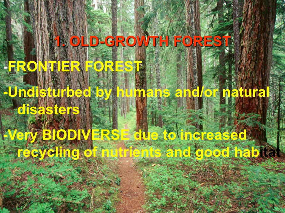 1. OLD-GROWTH FOREST -FRONTIER FOREST. -Undisturbed by humans and/or natural disasters.