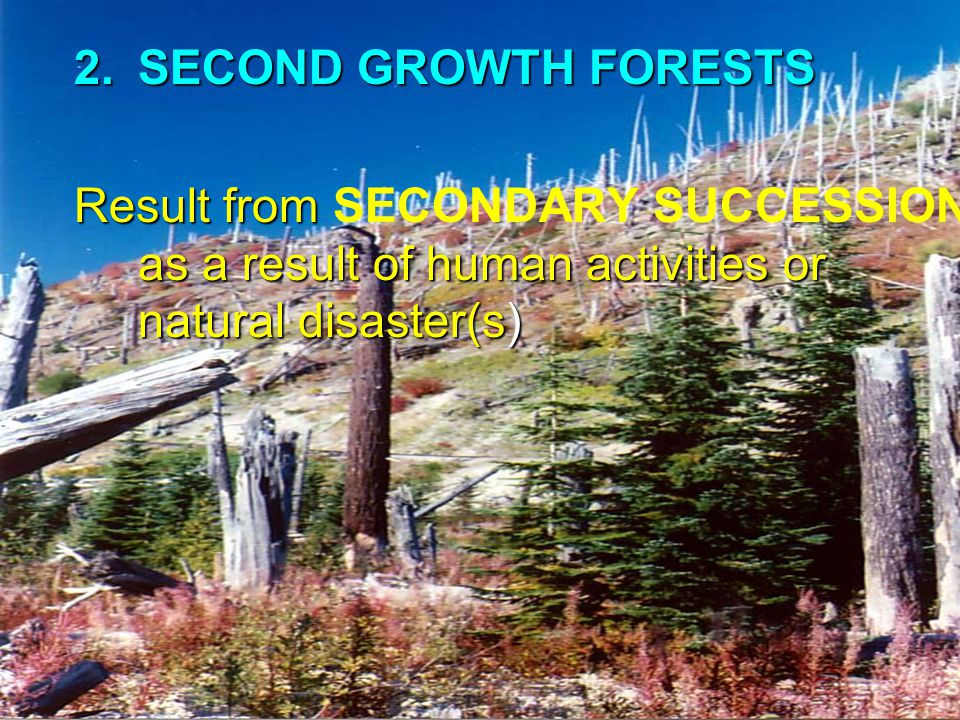 SECOND GROWTH FORESTS Result from SECONDARY SUCCESSION as a result of human activities or natural disaster(s)