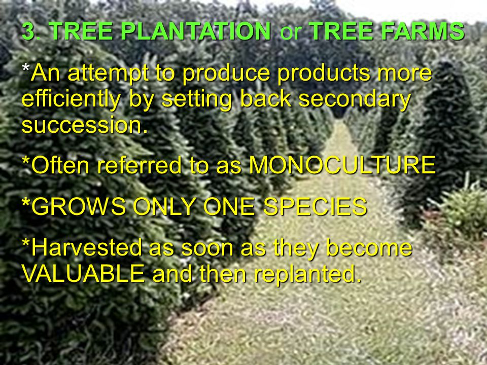 3. TREE PLANTATION or TREE FARMS