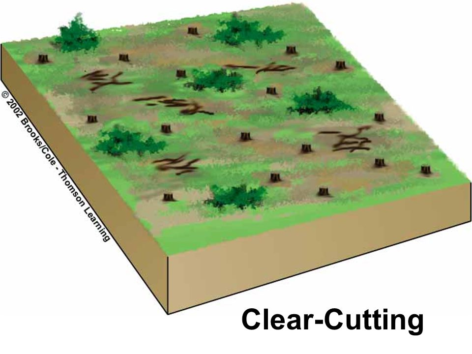Clear-Cutting
