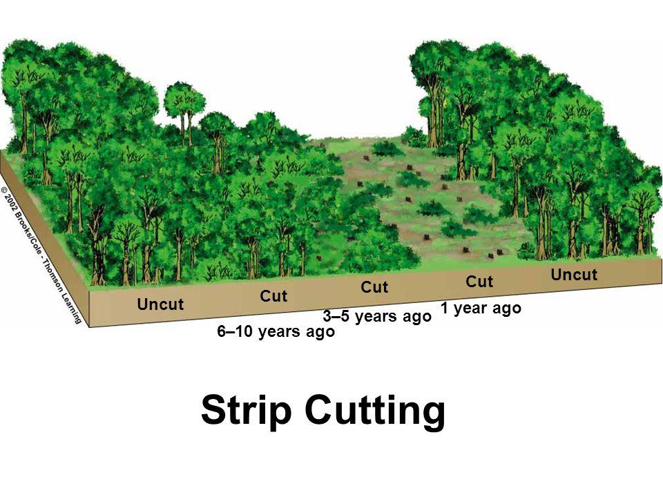 Strip Cutting Uncut Cut Cut Cut Uncut 1 year ago 3–5 years ago