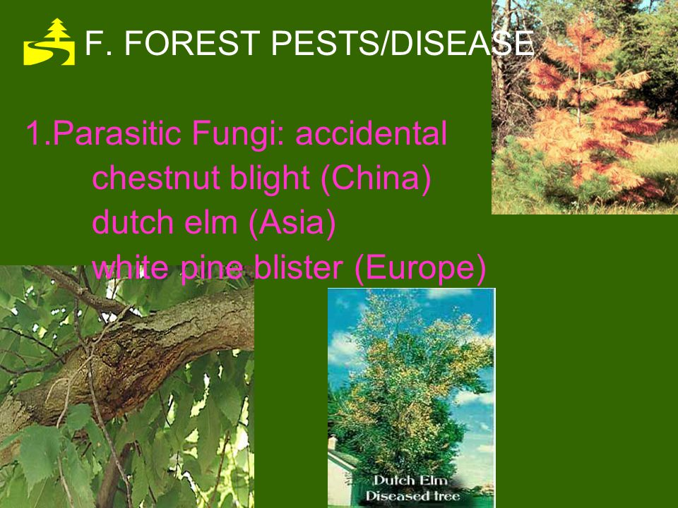 F. FOREST PESTS/DISEASE