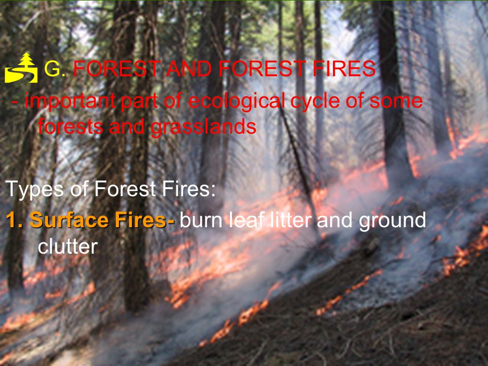 G. FOREST AND FOREST FIRES