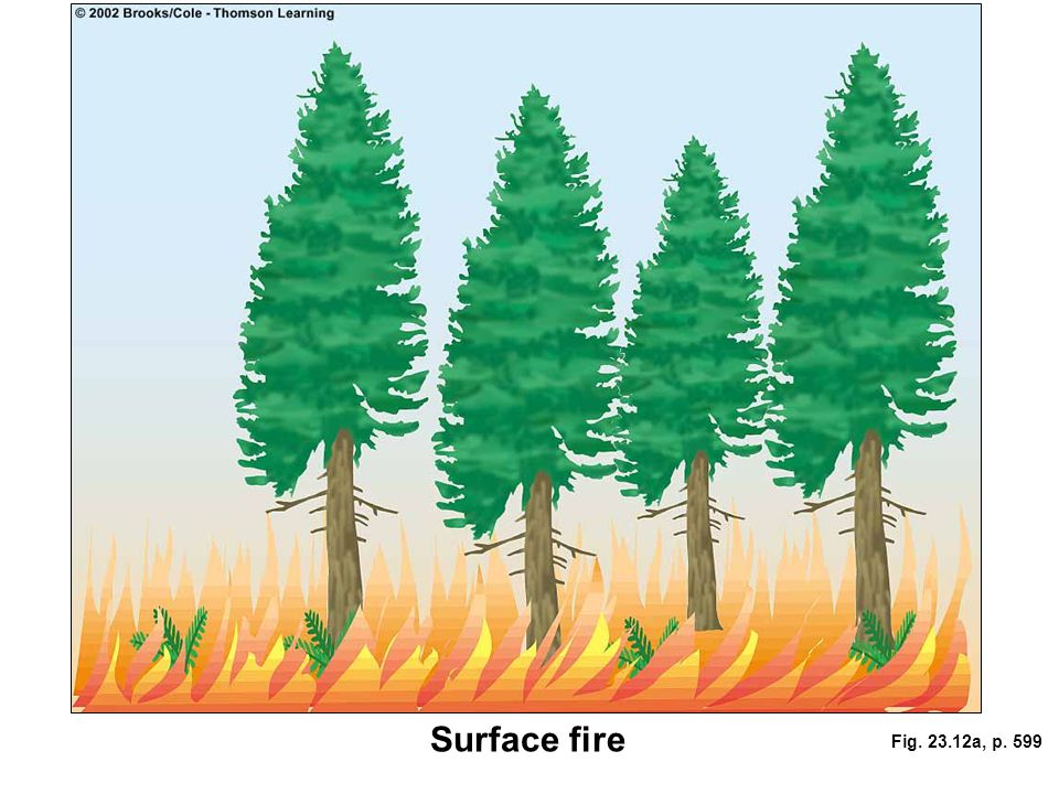 Surface fire Fig. 23.12a, p. 599