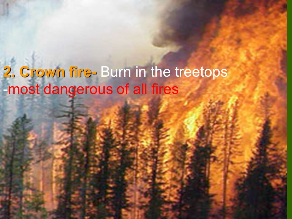 2. Crown fire- Burn in the treetops