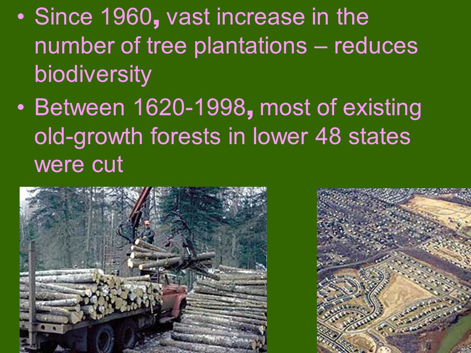Since 1960, vast increase in the number of tree plantations – reduces biodiversity