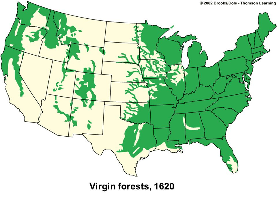 Virgin forests, 1620