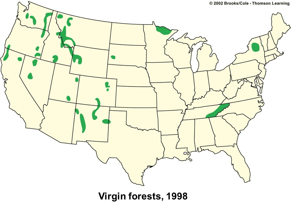 Virgin forests, 1998