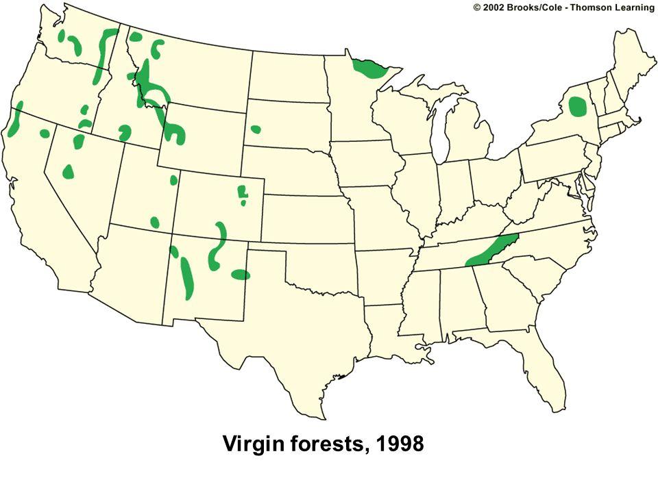 Virgin forests, 1998
