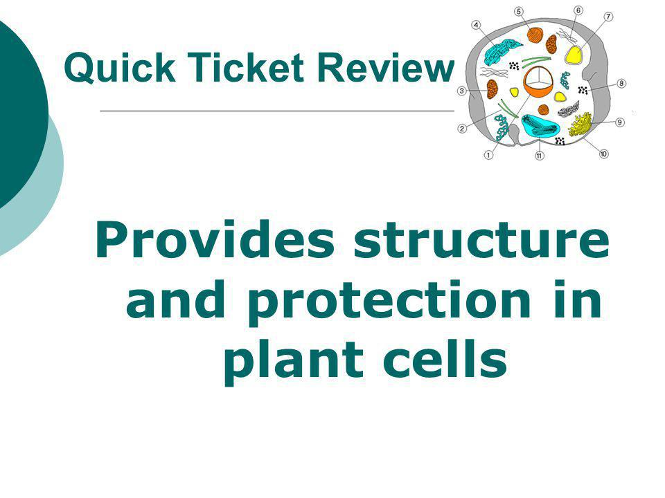 Provides structure and protection in plant cells