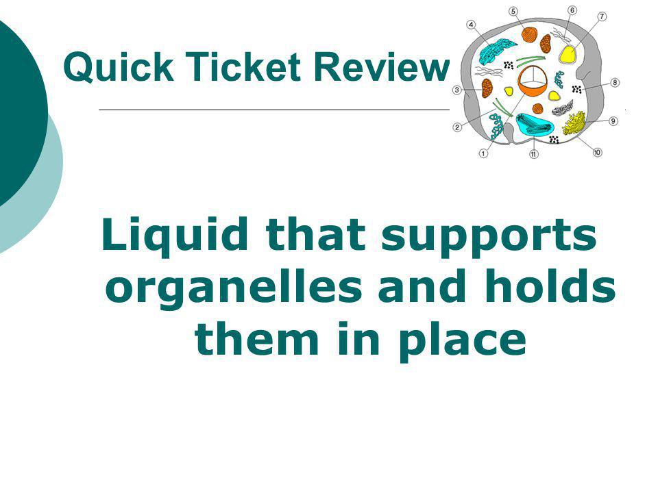 Liquid that supports organelles and holds them in place