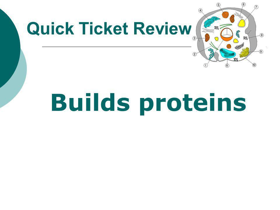 Quick Ticket Review Builds proteins