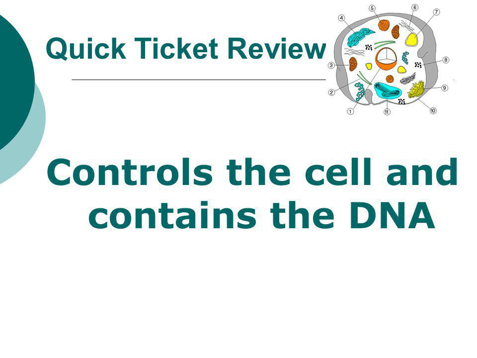 Controls the cell and contains the DNA