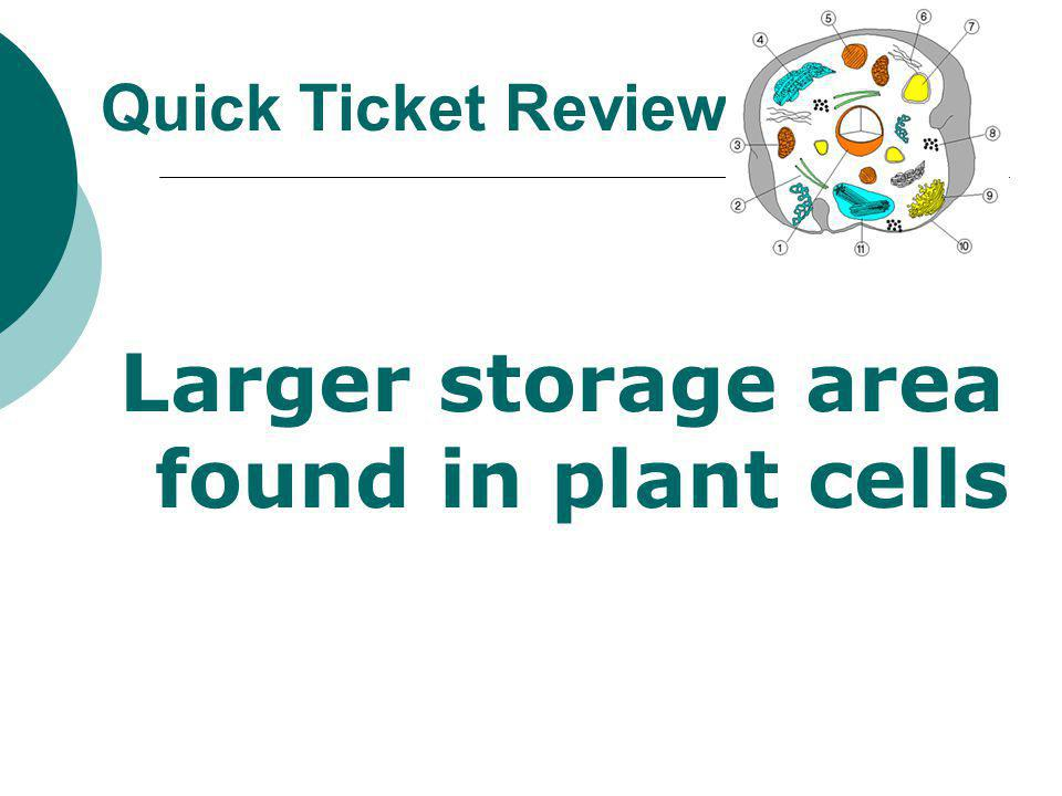 Larger storage area found in plant cells