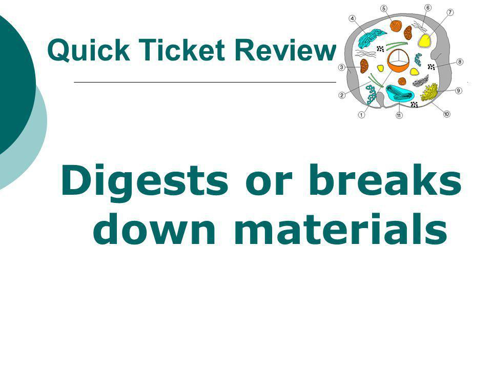 Digests or breaks down materials