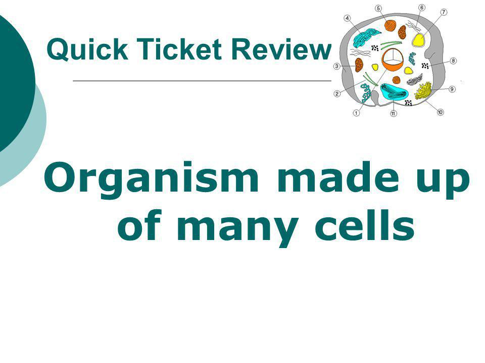 Organism made up of many cells