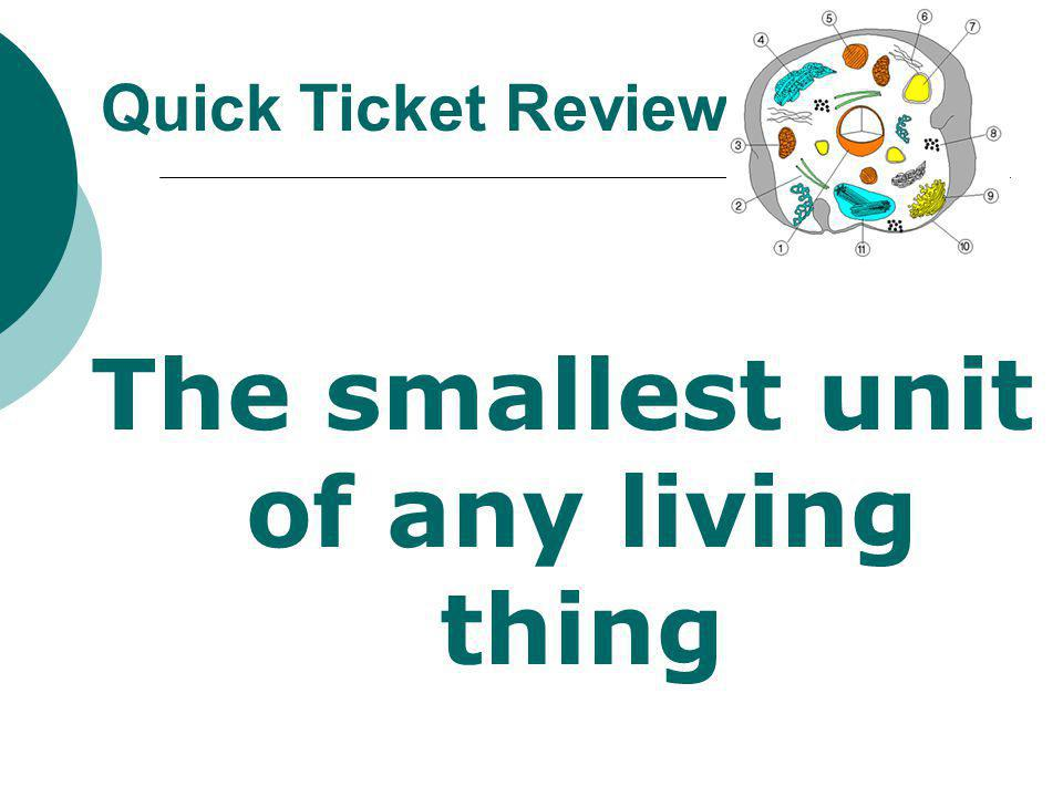 The smallest unit of any living thing