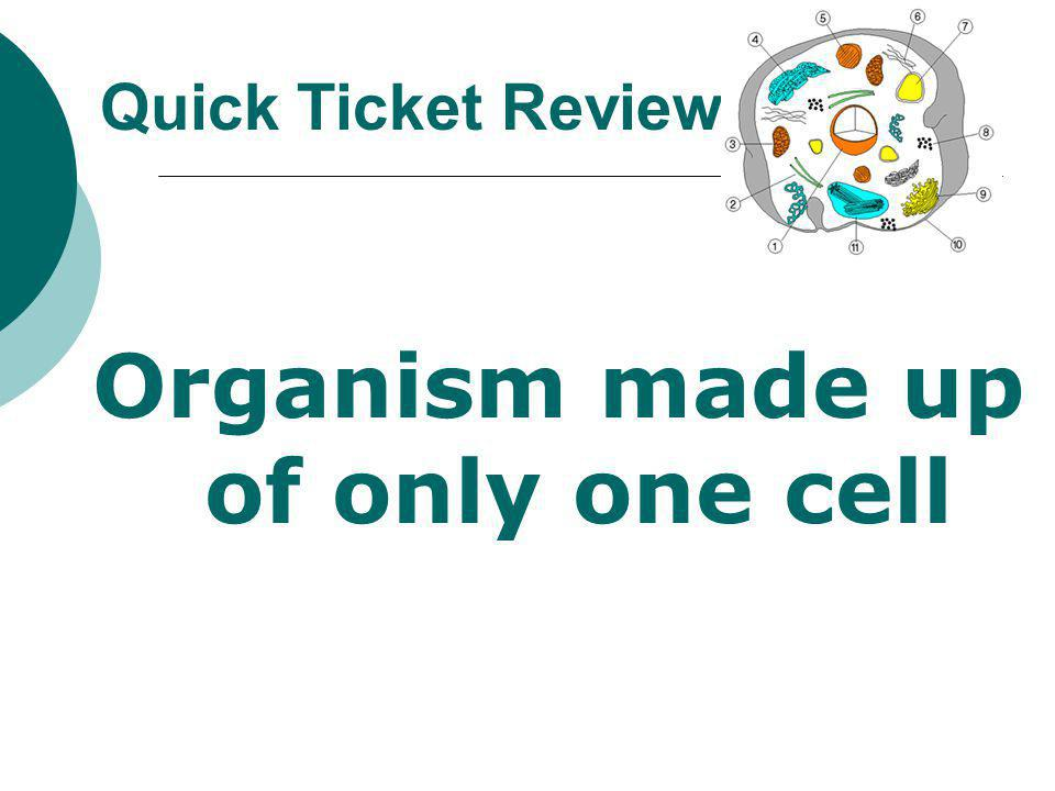 Organism made up of only one cell
