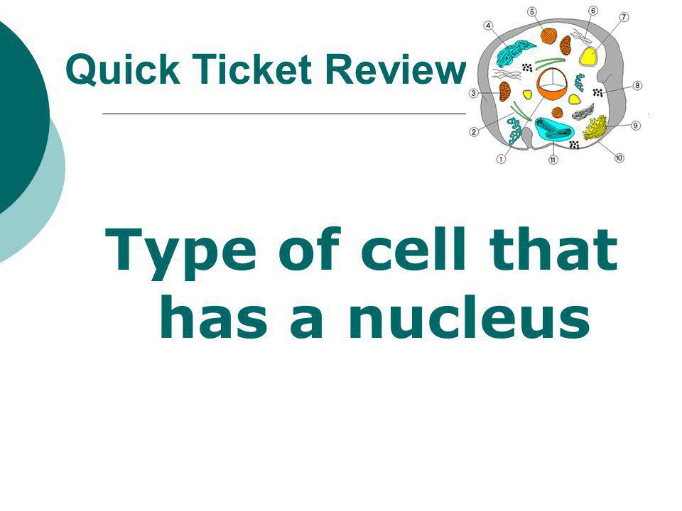 Type of cell that has a nucleus