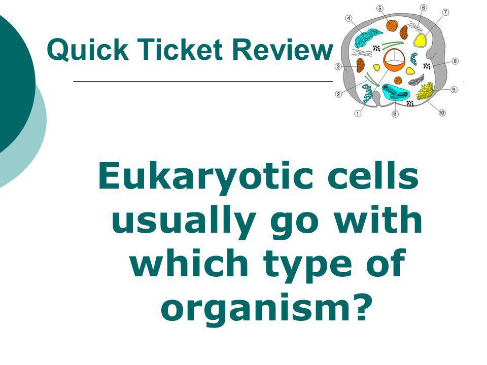 Eukaryotic cells usually go with which type of organism