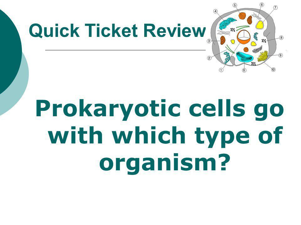Prokaryotic cells go with which type of organism