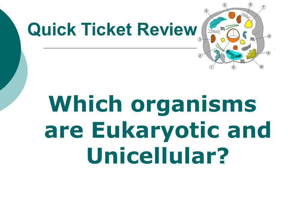 Which organisms are Eukaryotic and Unicellular