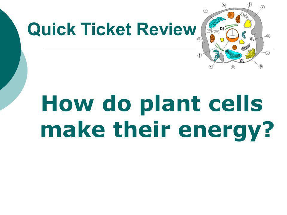 How do plant cells make their energy