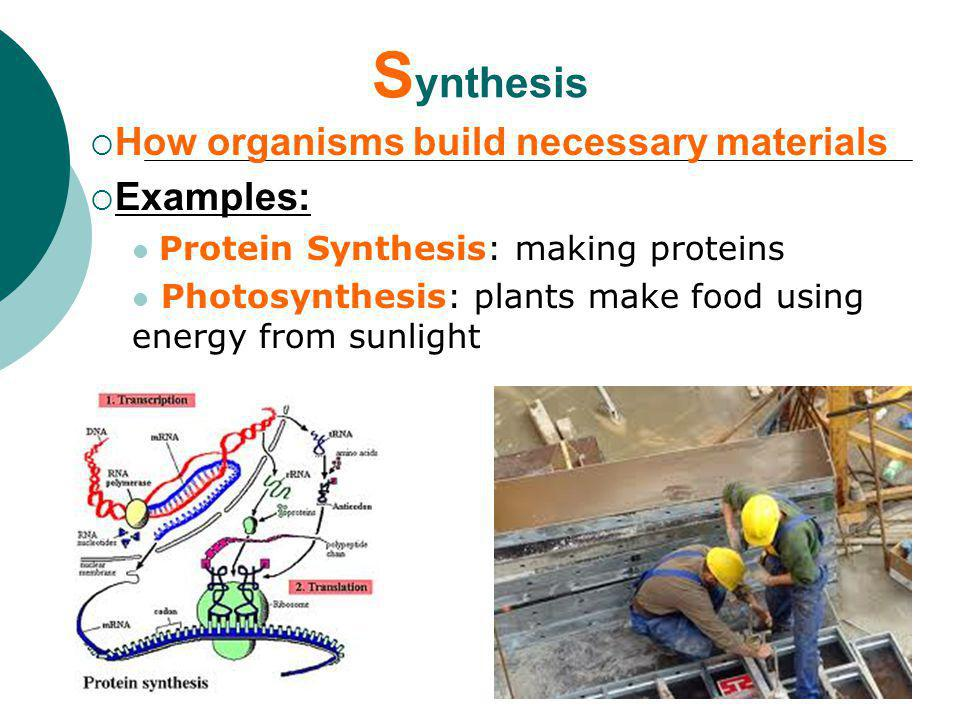 Synthesis How organisms build necessary materials Examples: