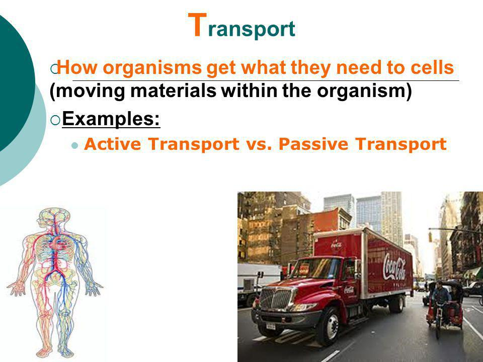 Transport How organisms get what they need to cells (moving materials within the organism) Examples: