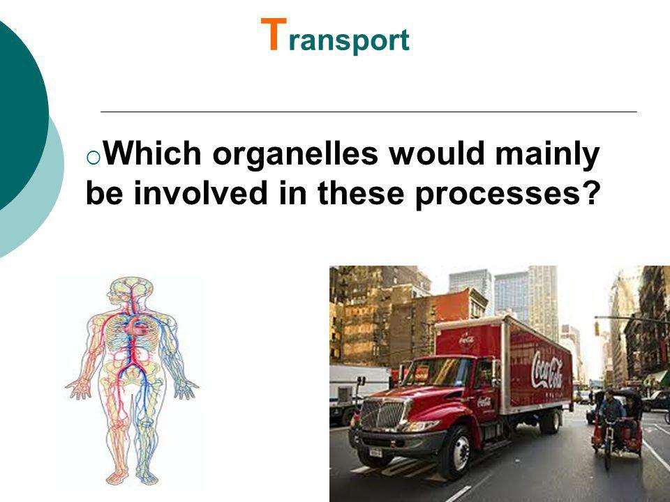 Transport Which organelles would mainly be involved in these processes
