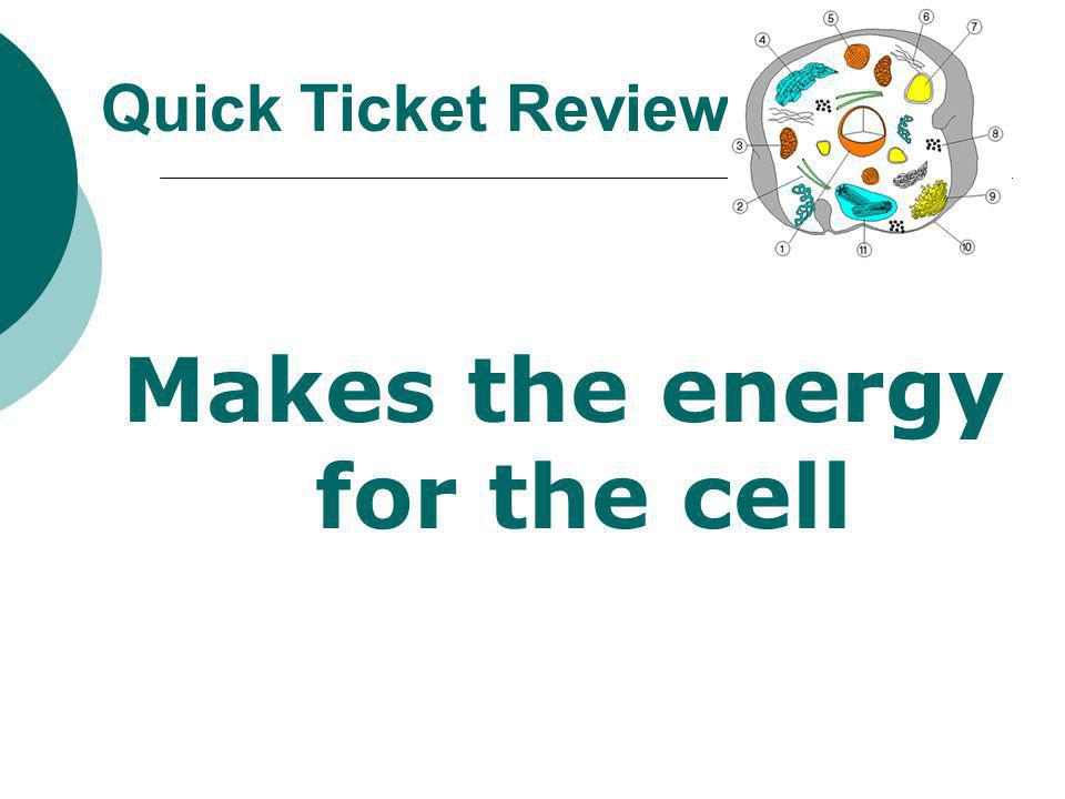 Makes the energy for the cell