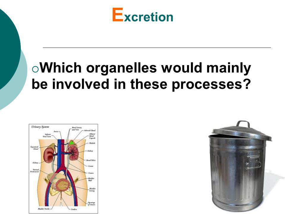 Excretion Which organelles would mainly be involved in these processes