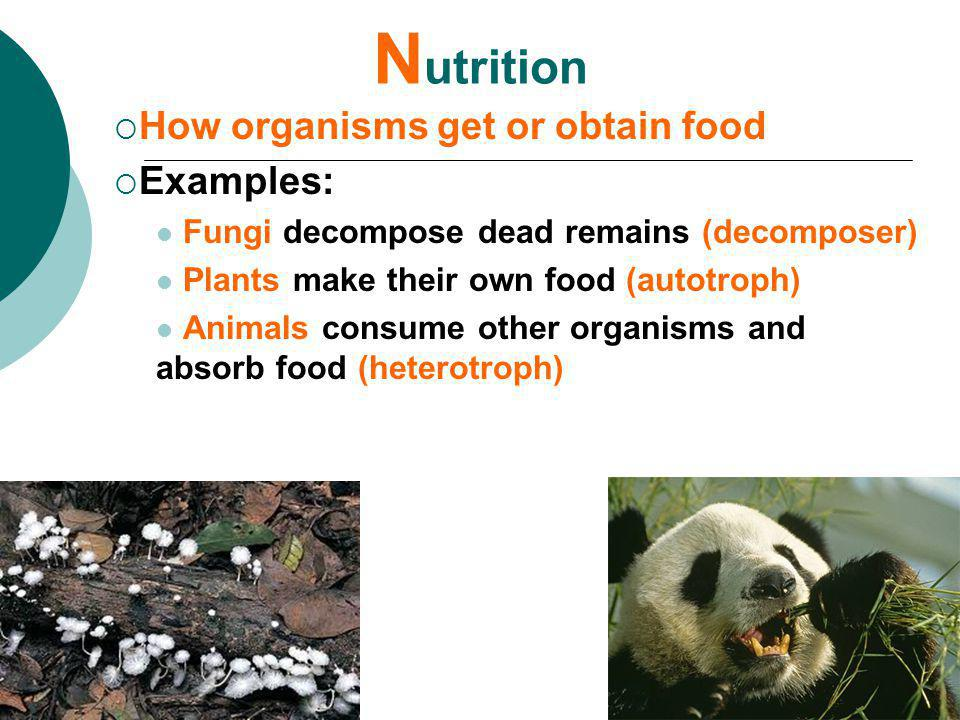 Nutrition How organisms get or obtain food Examples:
