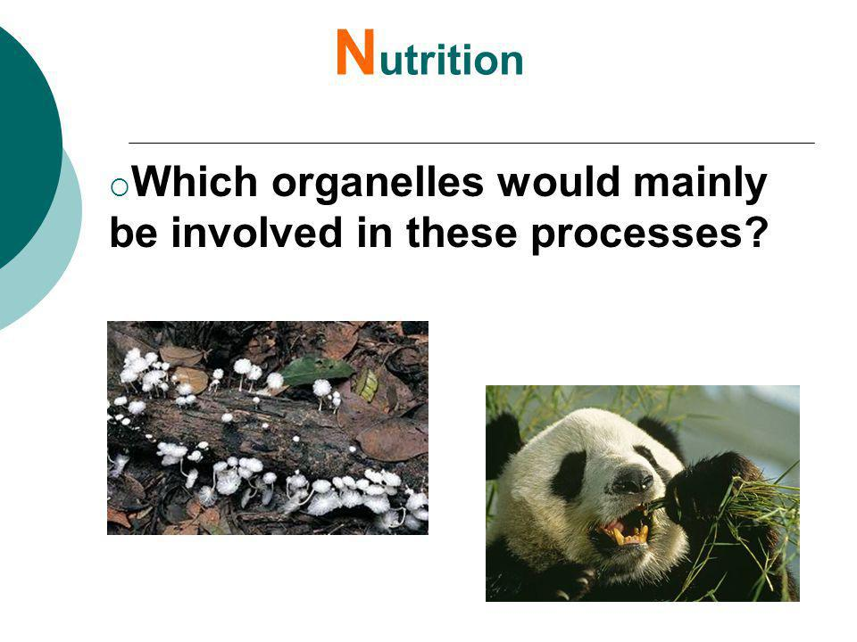 Nutrition Which organelles would mainly be involved in these processes