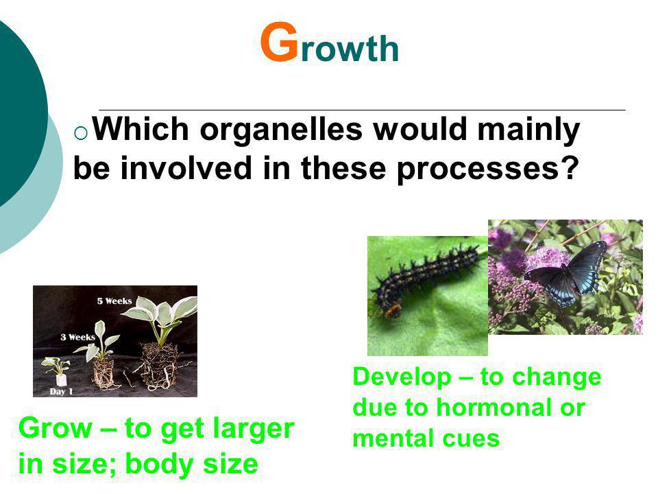 Growth Grow – to get larger in size; body size