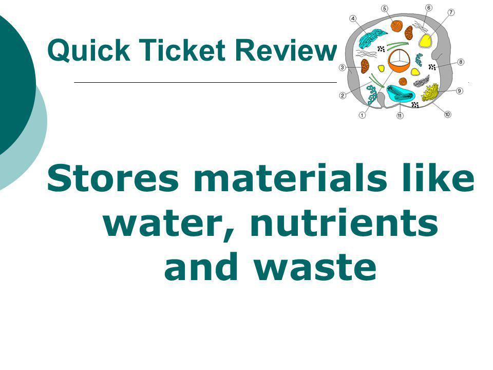 Stores materials like water, nutrients and waste