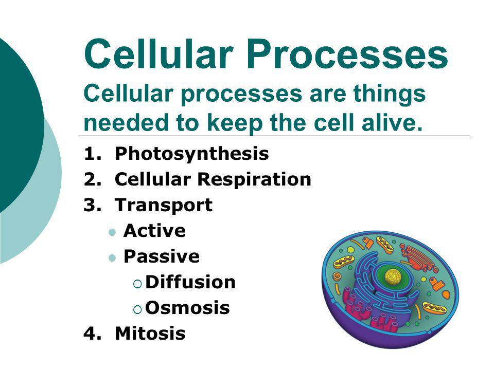 Cellular Processes Cellular processes are things needed to keep the cell alive.