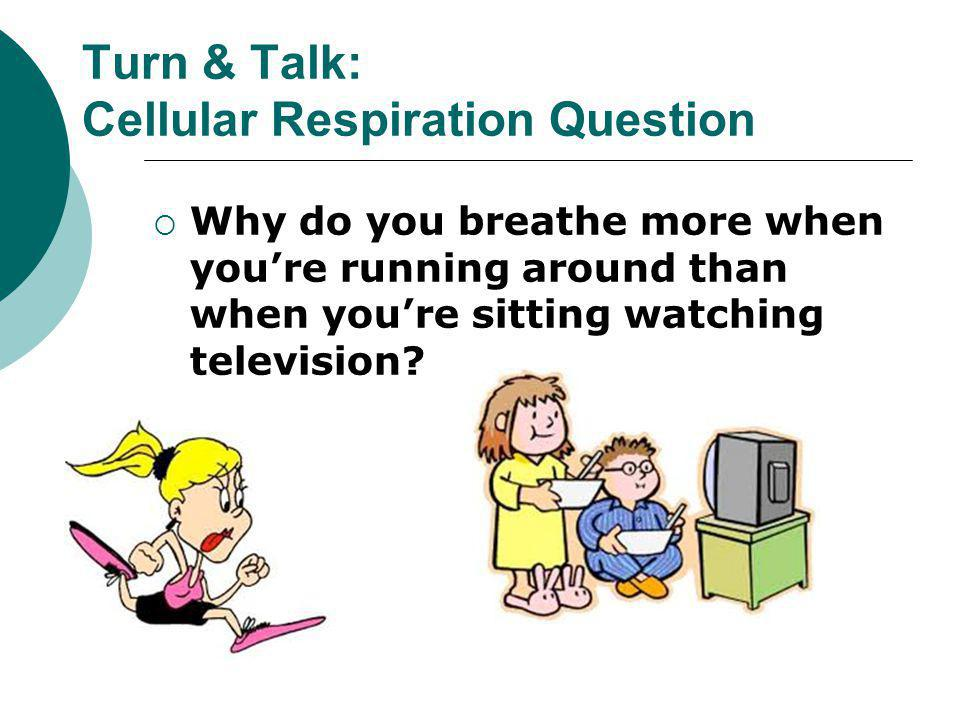 Turn & Talk: Cellular Respiration Question
