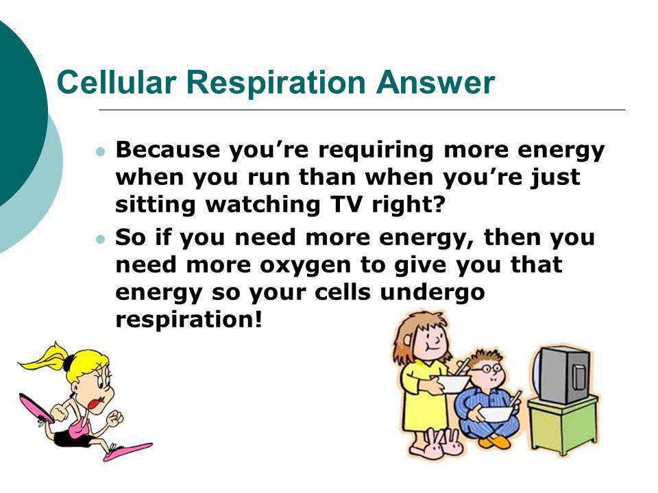Cellular Respiration Answer
