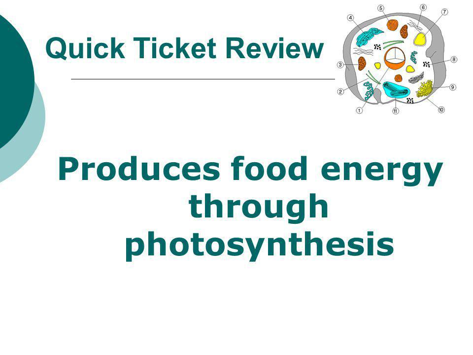 Produces food energy through photosynthesis